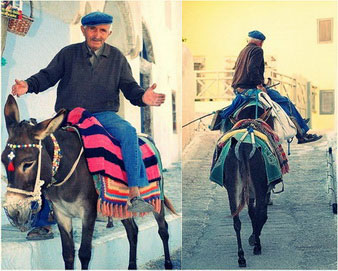 Donkey-in-Santorini-greek-islands
